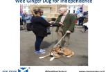 Wee Ginger Dug for independence