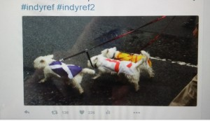 Westies for independence